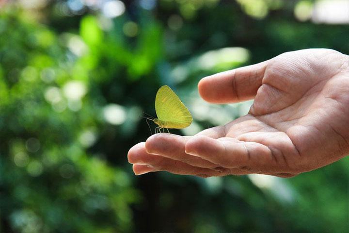 http://www1.sangha.blisswisdom.org/images/7/07031/0703100.jpg